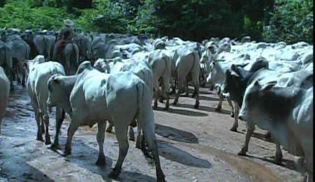 No final não se tratou de vacas ou do velopé, como sempre, se tratou de nossas limitações e um Rally é o local certo para mostrar os pontos fracos. (foto:whatsapp_Rally_estrada_real)